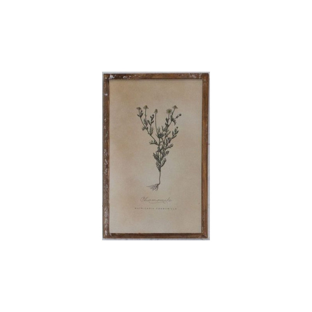 Chamomile Print In Washed Wooden Frame  Homewares nz
