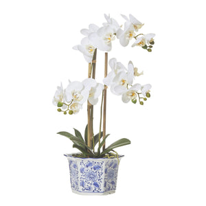 Butterfly Orchid Chinoiserie Pot - Large  Homewares nz