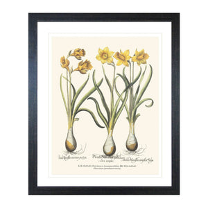 Colonial Canna Print In Black Frame Homewares nz