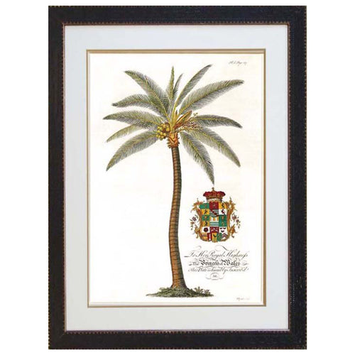 Crested Coco Palm Print In Black Frame  Homewares nz