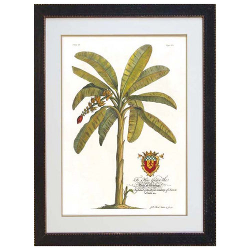 Crested Banana Palm Print In Black Frame  Homewares nz