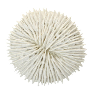 Fungia Coral  Homewares nz