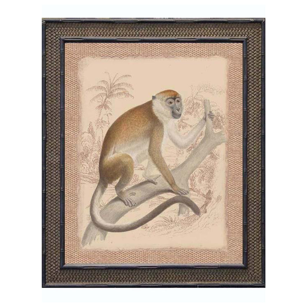 Monkey With White Belly Print In Black Frame 48x50cm Homewares nz
