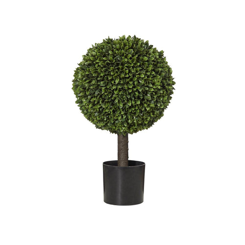 Box Leaf Ball Topiary In Pot 60cm