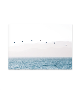 Pictured: calming image of birds flying over the sea