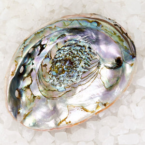 Abalone Shell Soap Dish - Large