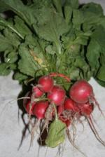 Red Radish bunch