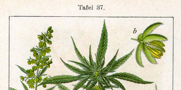 History of Hemp and the Origins of CBD