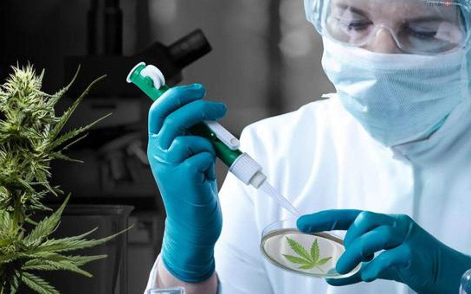 CBD oil to deal with cancer - fact or fiction?