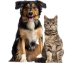 Our CBD oil for pets with proven benefits for cat, dogs and horses