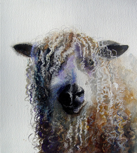 Longwool Sheep - Limited Edition Giclée Print