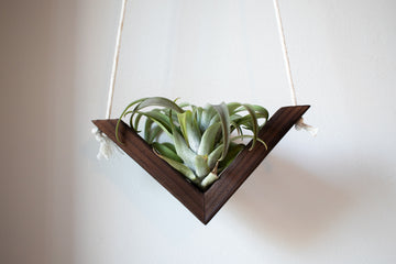 Wooden Air Plant Swing