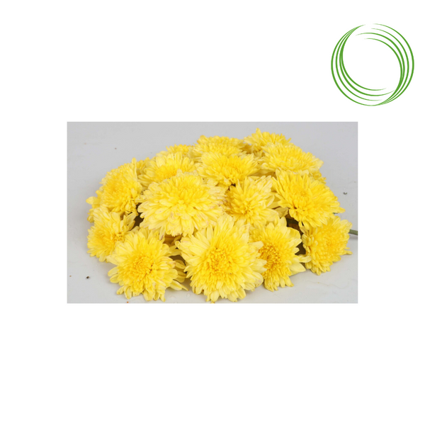 ROSE BAZAAR YELLOW CHRYSANTHEMUMS PUJA FLOWERS 100GM