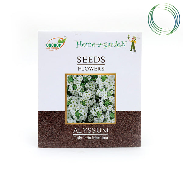 OC ALYSSUM FLOWER SEEDS 45NOS