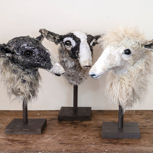 Curly Dorper-Cross  Sheep Sculpture