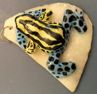 Wounaan Embera Poison Dart Frog Tagua Nut Pendant Carving-Panama 19102203mm