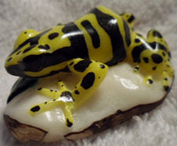Wounaan Embera Tagua Nut Poison Dart Frog Carving-Panama 20010609mm