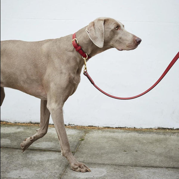 The Best Scarlet Red Leather Dog Collar and Lead by Opari with beautiful soft Italian leather