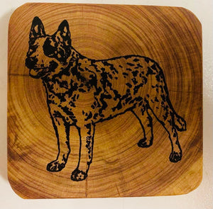 Coaster - Australian Cattle Dog