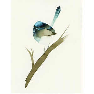Squirrel Design Studio Greeting Card - Blue Wren