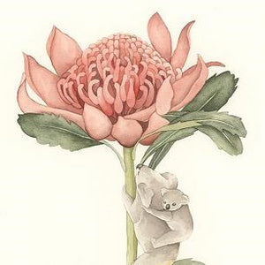 Squirrel Design Studio Greeting Card - My Waratah