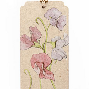Seeds Gift Tag - Sweet Pea | Sow n Sow | Paperpoint Stationery South Melbourne