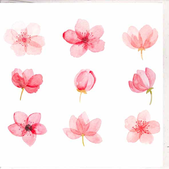 Paper Street Greeting Card - Cherry Blossom