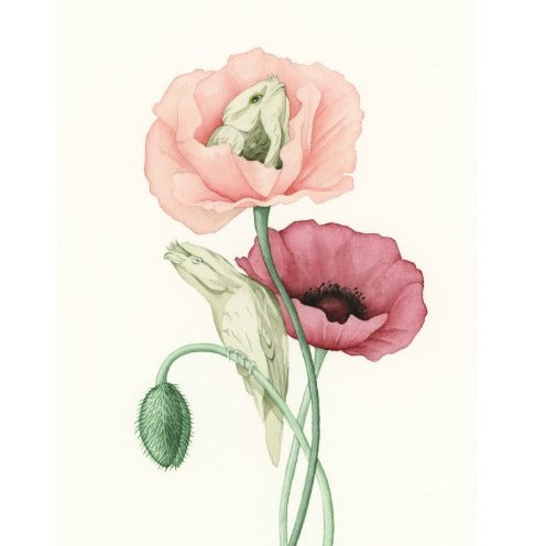Squirrel Design Studio Greeting Card - Tawny Poppies