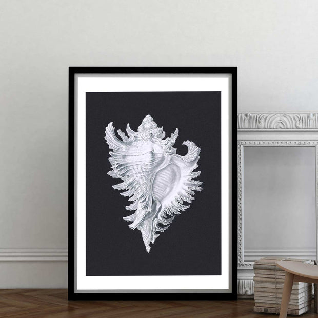 Black & white conch shell art print