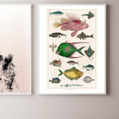 Colourful fish art print