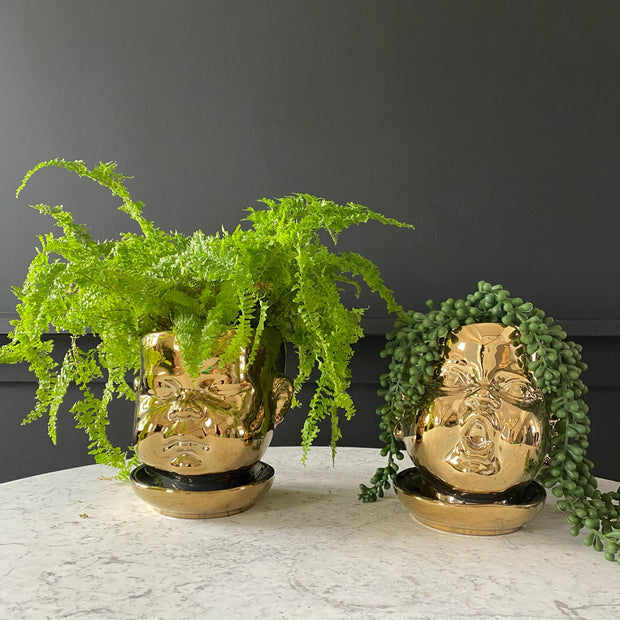 Set of 2 gold baby face plant pots