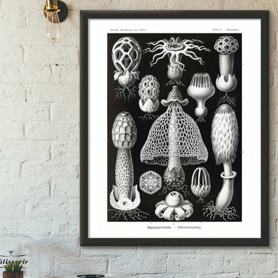 Black & white mushrooms art print