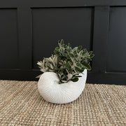 Small white shell planter