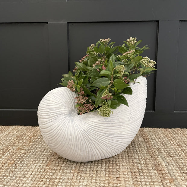 Large white shell planter