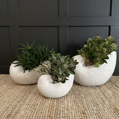 Set of three white shell planters