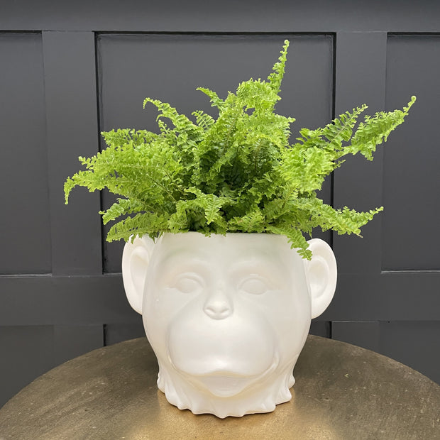 White monkey plant pot with it's mouth open