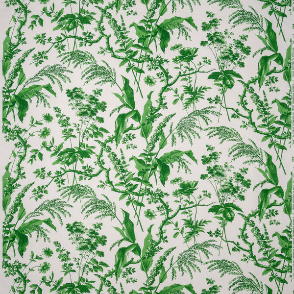 Penny-Morrison-Aspa-Green-Leaf-Floral-Illustrative