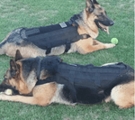 Tactical Dog Vest (Service Dog Friendly!) - My Naked Dog