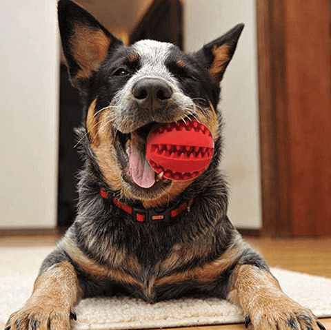 Dental Hide-Away Ball - My Naked Dog