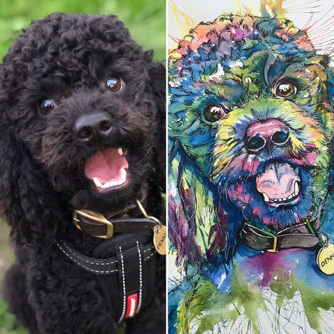 watercolour pet portrait of a miniature poodle