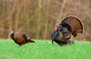 Turkey Season is Almost Here...