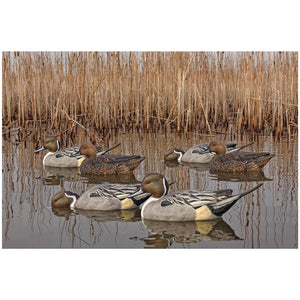 Avian X Topflight Pintails Fusion Series - Pacific Flyway Supplies
