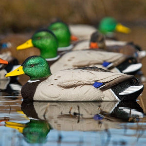 SX Decoys Mallard Floater Painted 6 Pack - Pacific Flyway Supplies