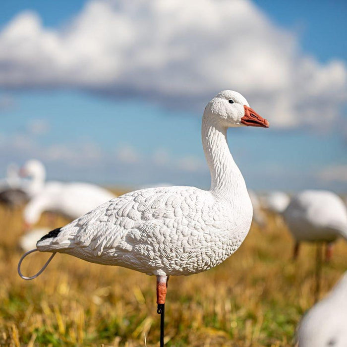 SX Decoys Full Body Tall Neck Sentry Adult Snow Goose Decoys 6 Pack