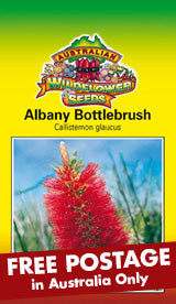 Callistemon glaucus - Albany Bottlebrush (SEEDS)