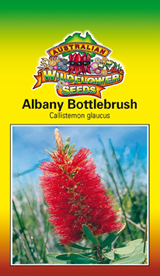 Callistemon glaucus - Albany Bottlebrush (OVERSEAS OPTION NO GST) (SEEDS)