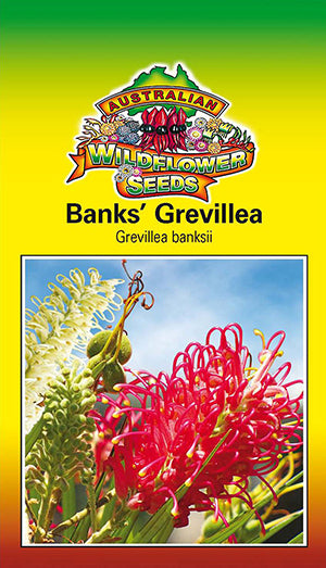 Grevillea banksii - Banks' Grevillea (OVERSEAS OPTION NO GST) (SEEDS)