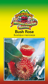 Eucalyptus macrocarpa - Bush Rose (OVERSEAS OPTION NO GST) (SEEDS)