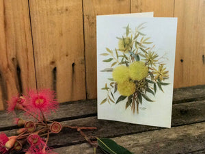 AUSTRALIAN NATIVE WATER COLOUR CARDS (Single Flowers)