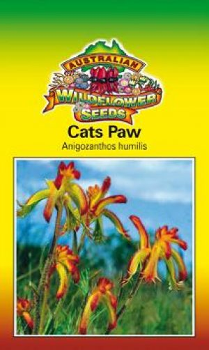 Anigozanthos humilis - Cats Paw (OVERSEAS OPTION NO GST) (SEEDS)